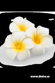 Dekorativní květ plumeria alba 3ks