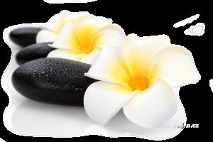 Dekorativní květ plumeria alba 3ks Dedra